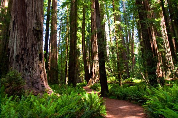 Ancient forest meditation to relax your feet and legs.